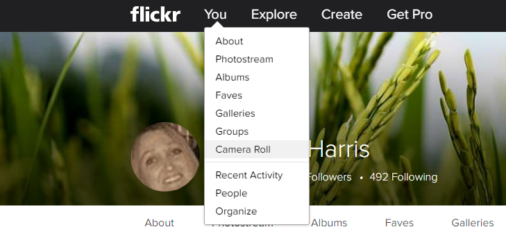 How to Download Your Flickr Photos Before Deletion in 3 days